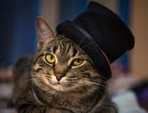 在帽子的猫 库存照片