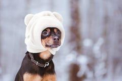 在帽子,在冬天森林空间的一只滑稽的小狗的一条狗文本的 图库摄影