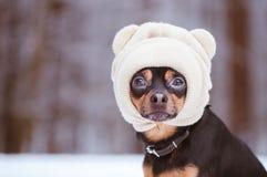 在帽子,在冬天森林空间的一只滑稽的小狗的一条狗文本的 库存照片
