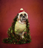在帽子alnd闪亮金属片的节假日牛头犬 免版税库存照片