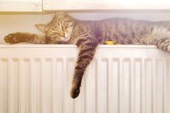 在幅射器的猫 免版税库存图片