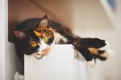 在幅射器的猫 免版税图库摄影