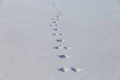 在干净的雪原的野兔轨道 minimalistic冬天的背景 图库摄影