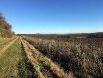 在干向日葵旁边的领域的草道路在自然公园埃菲尔山,德国的晴朗的冬日 免版税库存照片