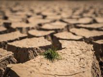 在干和破裂的土壤的小草成长 免版税库存照片