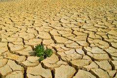 在干旱的土壤的生活 库存照片