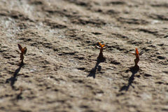 在干旱的沙漠幻觉的新芽菜环境美化 库存图片