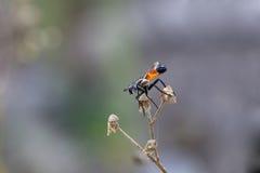 在干春黄菊分支的一点飞行  免版税库存照片