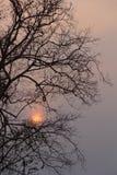在干枝杈之后的日落 免版税库存照片