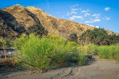 在干河床的绿色和黄色灌木 免版税图库摄影