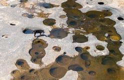 在干河的一条狗 免版税库存图片
