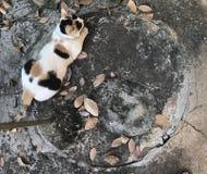 在干燥叶子中的一只可爱的猫 免版税库存照片