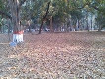 在干燥叶子森林里发现方式 免版税库存图片