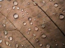 在干燥叶子的雨珠 免版税库存图片