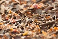 在干燥叶子的蜻蜓 库存图片