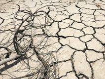 在干燥和破裂的地面效应的干燥树枝从全球性战争 免版税库存照片