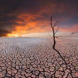 在干燥地球上的干燥树 免版税库存照片