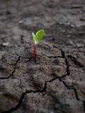 在干燥地面的新芽 库存图片