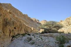 Judea沙漠。 免版税库存图片