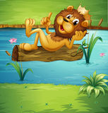 在干燥木头的一头微笑的狮子 库存照片