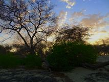在干燥森林的日落 免版税库存照片