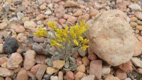 在干燥河床的花 库存照片