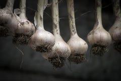 在干燥的垂悬的大蒜 免版税库存照片