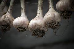 在干燥的垂悬的大蒜 库存照片