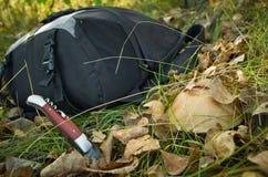 在干燥秋叶的蘑菇 免版税图库摄影