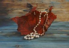 在干燥秋天枫叶,葡萄酒样式背景的白色珍珠项链 干燥标本集 艺术性的原始的背景 免版税库存图片