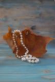 在干燥秋天枫叶,葡萄酒样式背景的白色珍珠项链 干燥标本集 艺术性的原始的背景 图库摄影