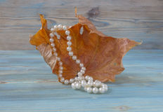 在干燥秋天枫叶,葡萄酒样式背景的白色珍珠项链 干燥标本集 艺术性的原始的背景 库存照片