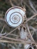在干燥等级的蜗牛在植物园- Macea,阿拉德县,罗马尼亚 免版税库存照片