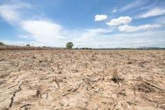 在干燥米领域的树在收获以后有在讽刺文泰国的蓝天背景在中午太阳光 免版税图库摄影