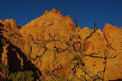 在干燥结构树的第一早晨光和岩石临近Moqui小山,犹他 库存图片