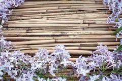 在干燥芦苇背景的淡紫色花 免版税库存照片
