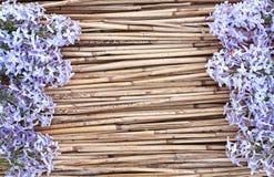 在干燥芦苇背景的淡紫色花 免版税图库摄影