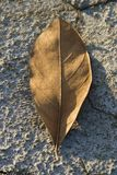 在干燥陆运的干燥叶子 免版税库存照片