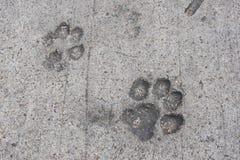 在干燥水泥的猫或狗脚印 免版税库存照片
