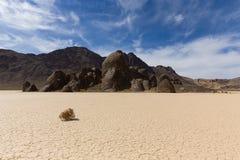 在干盐湖地板上的风滚草与破裂的泥 免版税库存图片