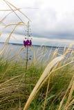 在干草中的一朵美丽的领域花 开花紫色 一朵偏僻的花 库存照片