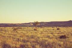 在干草原中间的两棵树在日落 免版税图库摄影