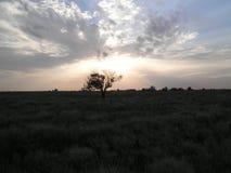 在干草原的一棵偏僻的树以晚上天空为背景 库存照片