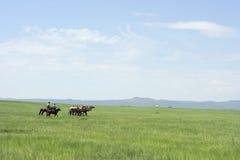 在干草原的两蒙古cameleers 库存照片