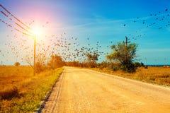 在干草原的乡下公路 库存照片