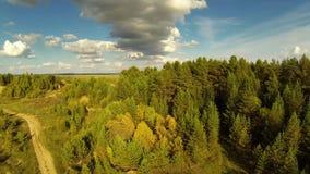 在干草原的农村路在夏日 具球果森林 股票录像