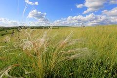 在干草原的夏天场面 库存照片
