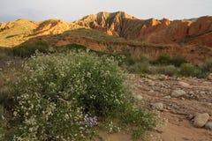 在干草原的多彩多姿的岩石 库存照片