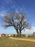 在干草原的孤立白杨树在春天 神圣的树在卡尔梅克共和国,俄罗斯 免版税图库摄影