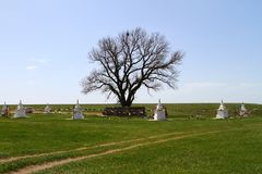 在干草原的孤立白杨树 卡尔梅克共和国,俄罗斯的神圣的树 库存图片